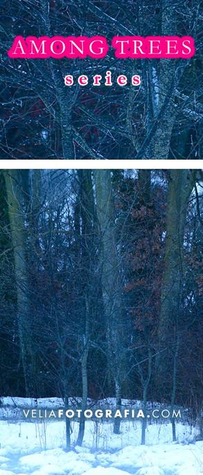 Among_trees_XII_cop.jpg