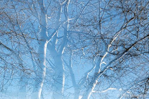 Winter branches - VI