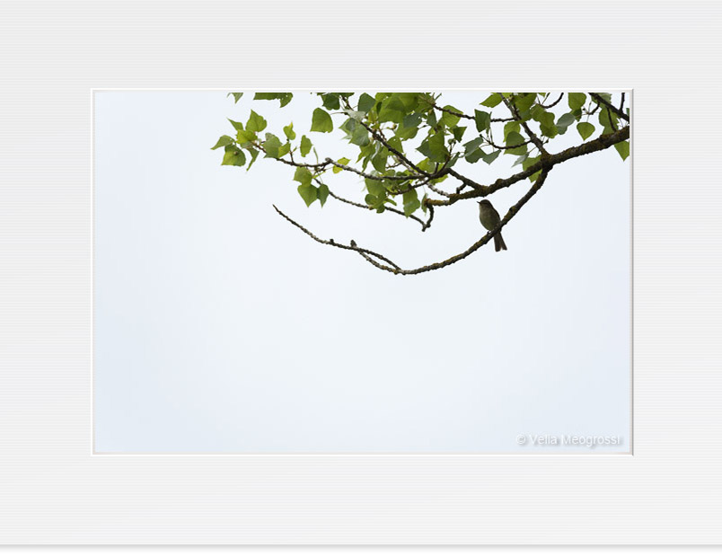 On the branches - III