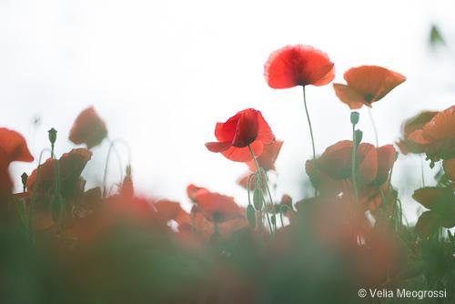Red fields - III
