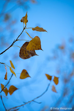 Autumn - The sound of colours - LXI