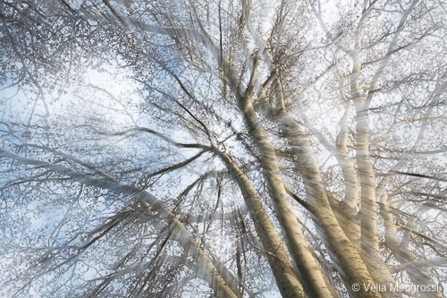 Winter branches - X (Spring is coming)
