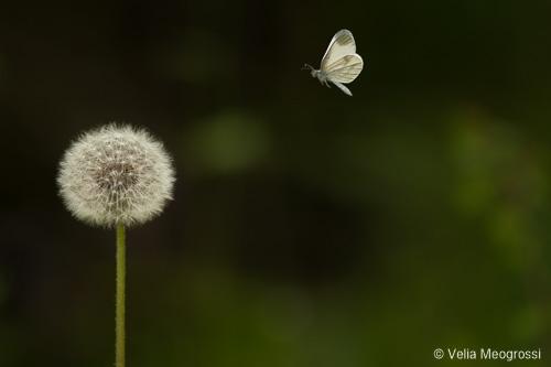 Little white world