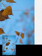 print_autumn_leaves_2_2018.jpg