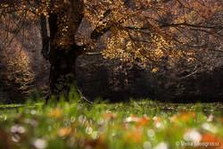 Seasons - I - Autumn stars