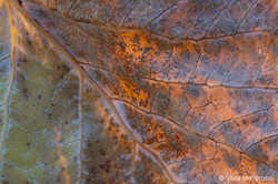 Autumn - The sound of colours - details