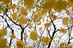 Autumn - The sound of colours - XXVII