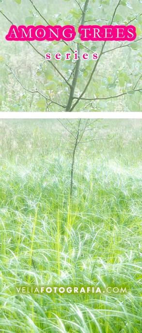 Among_trees_X.jpg