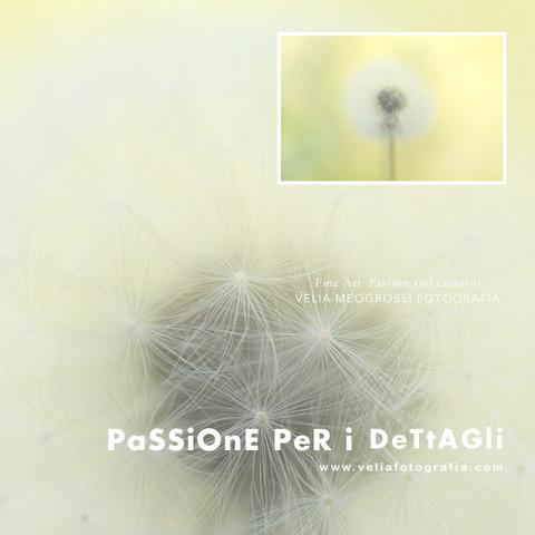print_dandelion.jpg