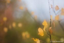 Autumn - The sound of colours - XI