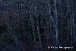 Among trees - XXI