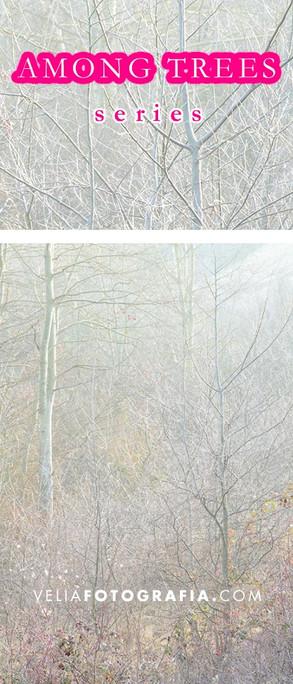 Among_trees_XI.jpg
