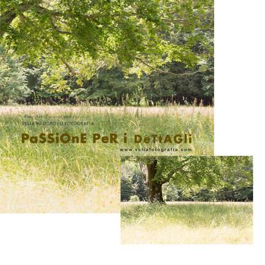 print_tree_summer.jpg