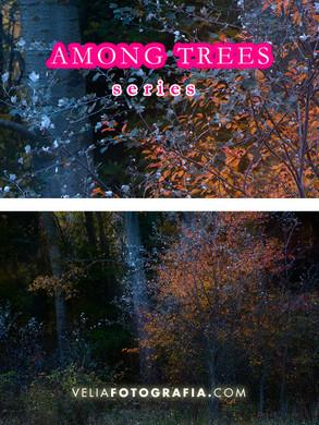 Among_trees_n_autumn_colors.jpg