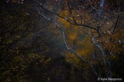 Autumn - The sound of colours - XXIV