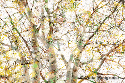 Autumn branches - VI