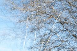 Winter branches - VII