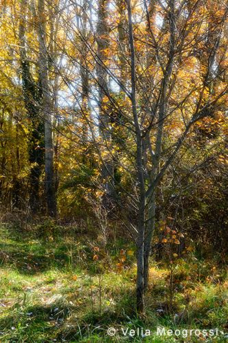 Sunny days of Autumn - III