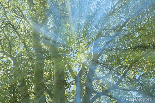 Spring branches - V