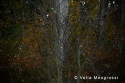 Autumn - The sound of colours - LXXV