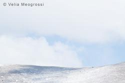 Winter - Sweet view - XXIII