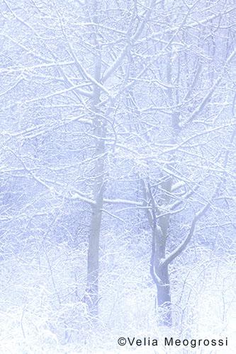 Among trees - XVII