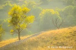 Among trees - XLIII