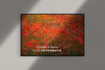 velia_fotografia_poppies.jpg