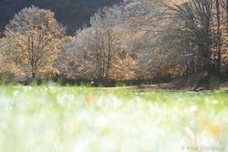Seasons - II - Magical woods - I