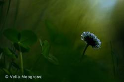 Spring fields - IV