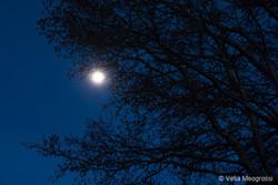 Silent moon - III