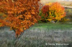 Among trees - V