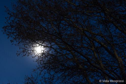 Silent moon - VIII