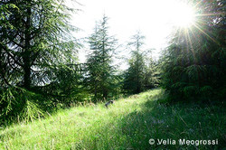 Among trees - XXXVII