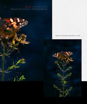 print_butterfly_1_2013.jpg