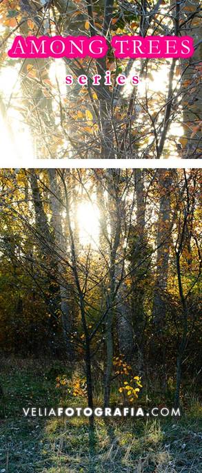 Among_trees_Autumn_sunny_days_cop.jpg