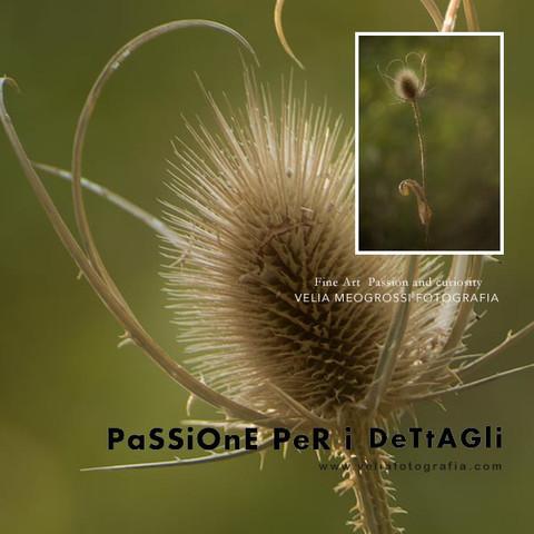 print_Thistle_1.jpg
