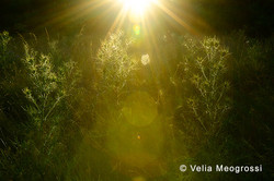 Summer fields - I