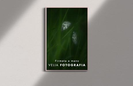 velia_fotografia_butterfly_1.jpg