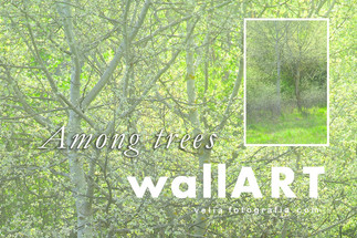 print_among_trees_06.jpg