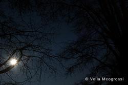 Silent moon - VII