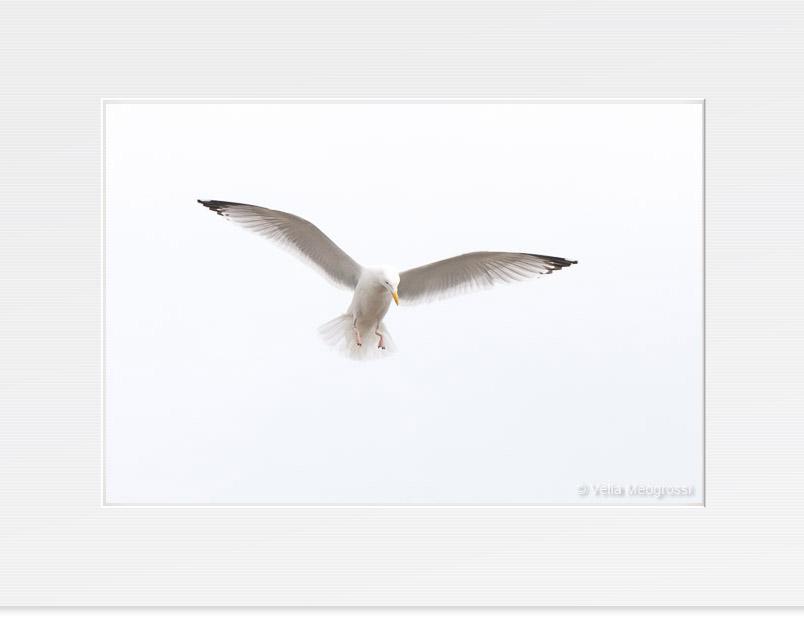 Open wings - III