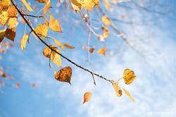 Autumn - The sound of colours - LX