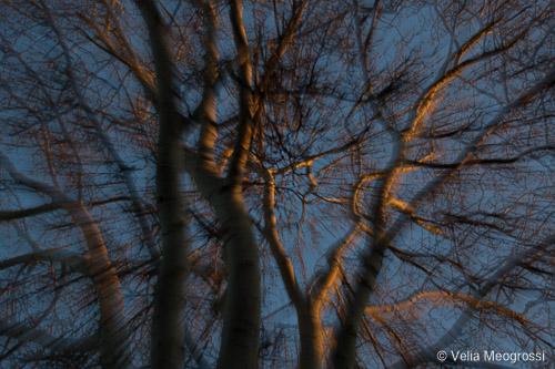 Winter branches - V