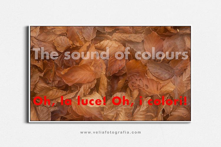 velia_fotografia_the_sound_of_colours_au