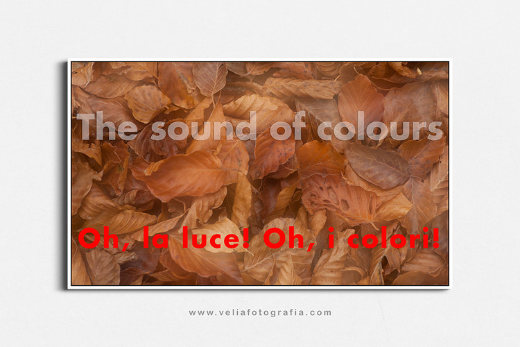 velia_fotografia_the_sound_of_colours_au