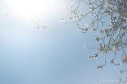Winter - The sound of colours - XXIV (la