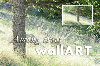 02_print_velia_fotografia_among_trees_00