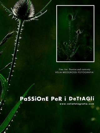 print_Thistle_3.jpg