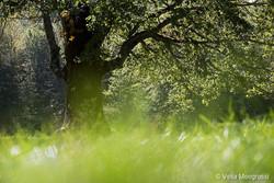 Seasons - I - September green breeze